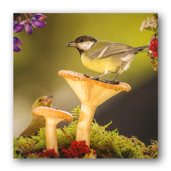 Great Tit Birthday Greetings Card from Dormouse Cards