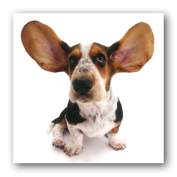 Funny Basset Hound Puppy Greetings Card from Dormouse Cards