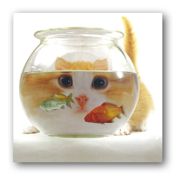 Funny Cat and Goldfish Greetings Birthday Card from Dormouse Cards