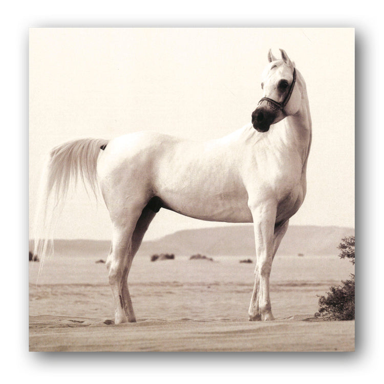 Arabian Horse Birthday Greetings Card from Dormouse Cards