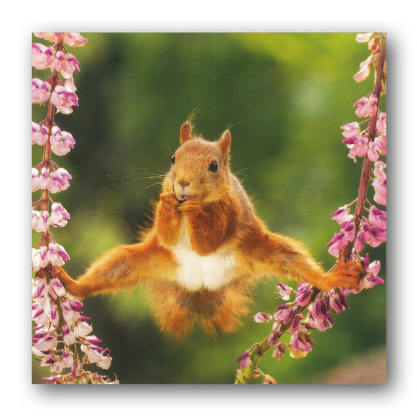 Red Squirrel Greetings Birthday Card from Dormouse Cards