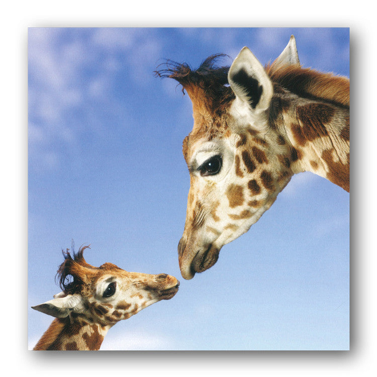 Giraffe and Calf Greetings Birthday Card from Dormouse Cards