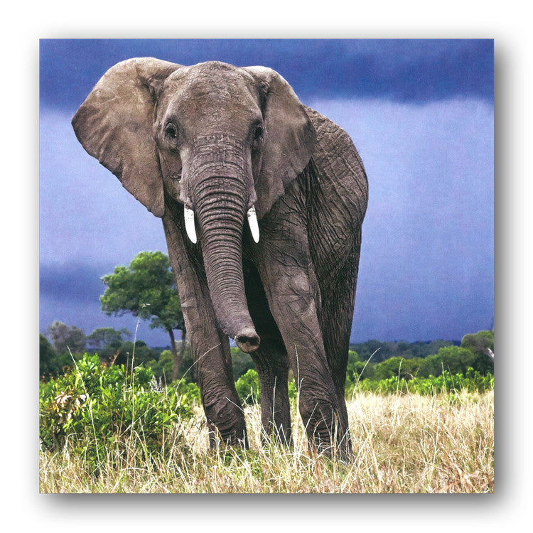 African Elephant Greetings Card from Dormouse Cards