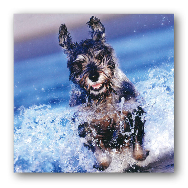 Schnauzer Dog Greeings Birthday Card from Dormouse Cards