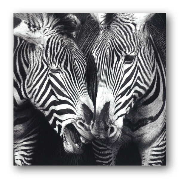 Grevy's Zebra Greetings Birthday Card from Dormouse Cards