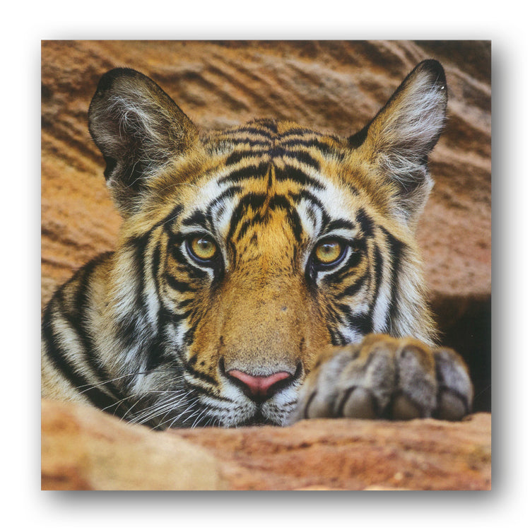 BBC earth Tiger Cub Greetings Card from Dormouse Card
