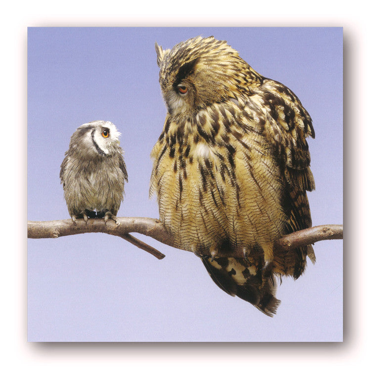 Scops Owl and Eagle Owl Greetings Birthday Card from Dormouse Cards