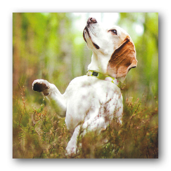 Beagle Dog Greetings Birthday Card from Dormouse Cards