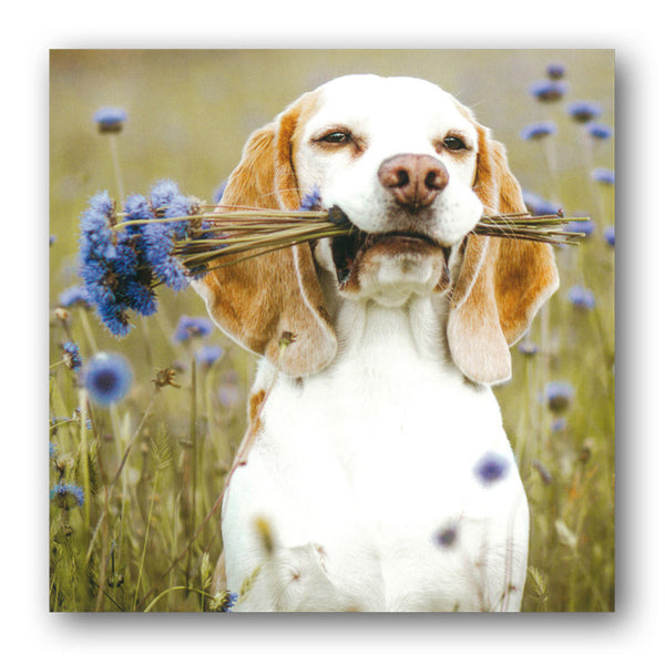 Beagle Dog in a Cornflower Meadow Greetings Birthday Card from Dormouse Cards