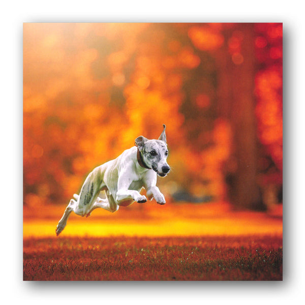 Greyhound Dog Greetings Birthday Card from Dormouse Cards
