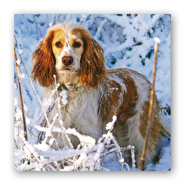 English Cocker Spaniel Christmas Card from Dormouse Cards