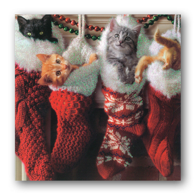 Avanti Kittens in Stockings Christmas Cards from Dormouse Cards