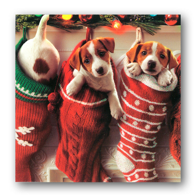 Pack of 12 Avanti Puppies in Stockings Christmas Cards - Dormouse Cards