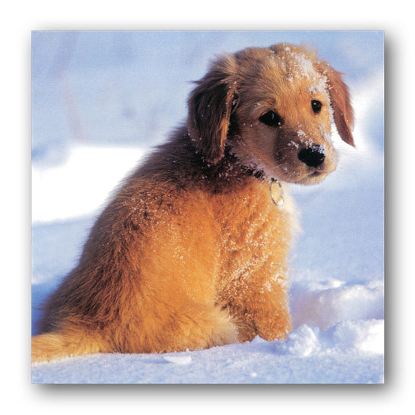 Pack of 16 Puppies in Snow Christmas Cards from Dormouse Cards