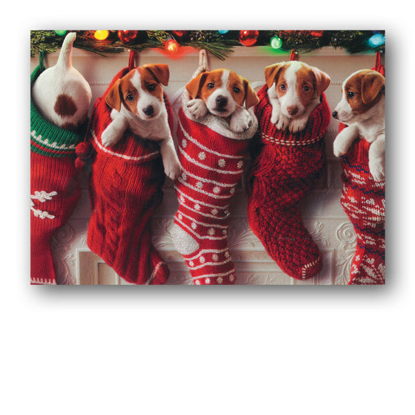 Funny Avanti Puppies in Stockings Christmas Card from Dormouse Cards