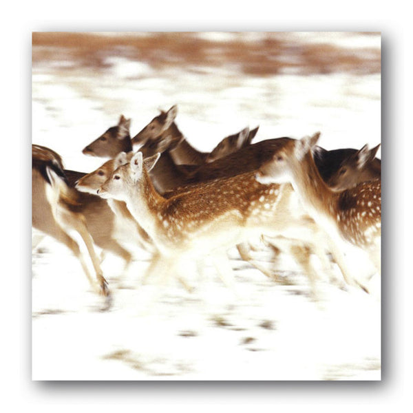 Christmas Card British Widlife Running Deer Dormouse Cards