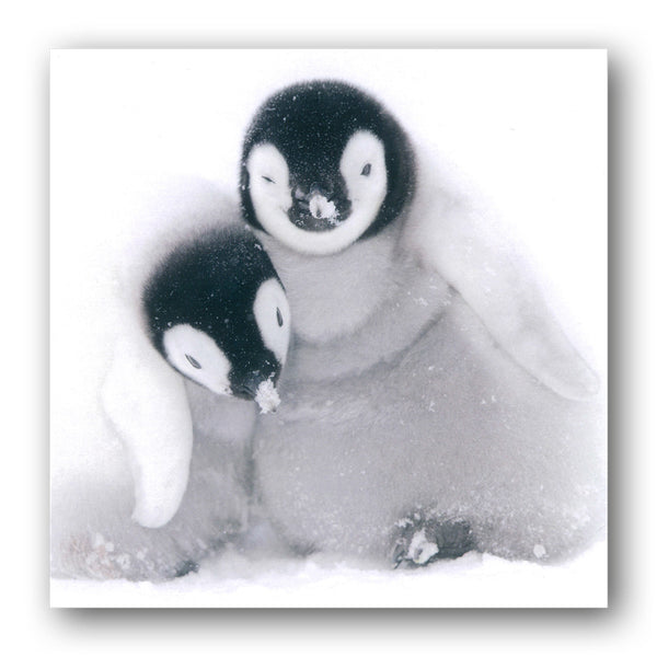 Emperor Penguin Chicks Greetings Card from Dormouse Cards