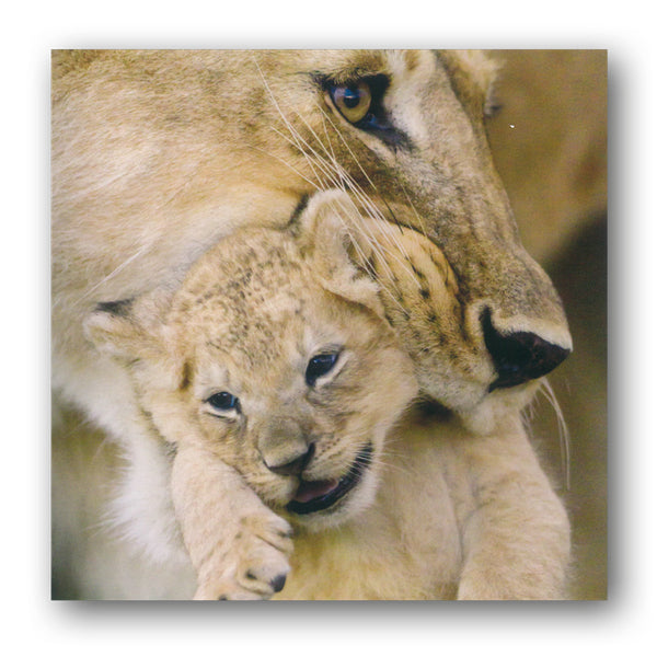 BBC earth Lioness and Cub Greetings Card from Dormouse Cards