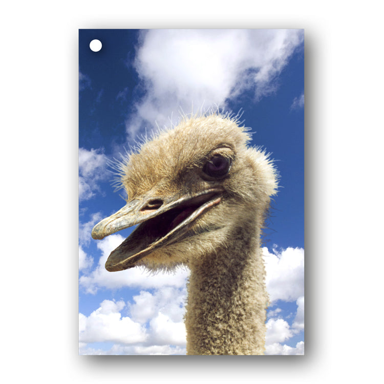 Emu Gift Tags from Dormouse Cards