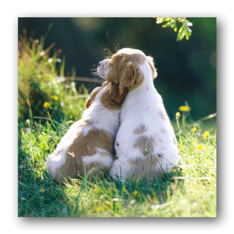 Puppy Cuddles Greetings Card