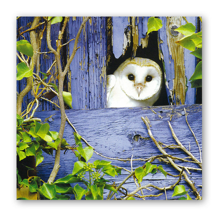 Barn Owl Greetings Card from Dormouse Cards