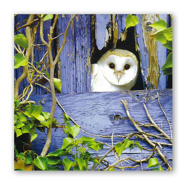 Barn Owl Birthday Greetings Card from Dormouse Cards