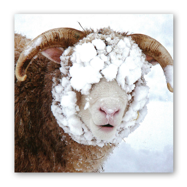 Funny Snowy Sheep Christmas Card from Dormouse Cards