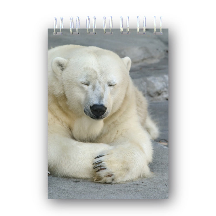 A6 Polar Bear Notebook from Dormouse Cards