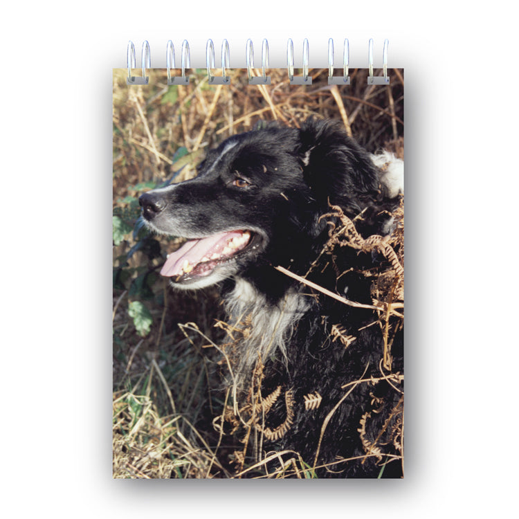 Border Collie Sheepdog Wire Bound Notebook from Dormouse Cards
