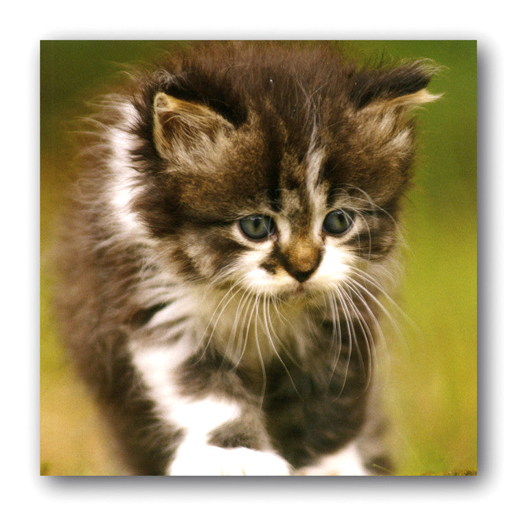 Curious Cat Kitten Birthday Card from Dormouse Cards