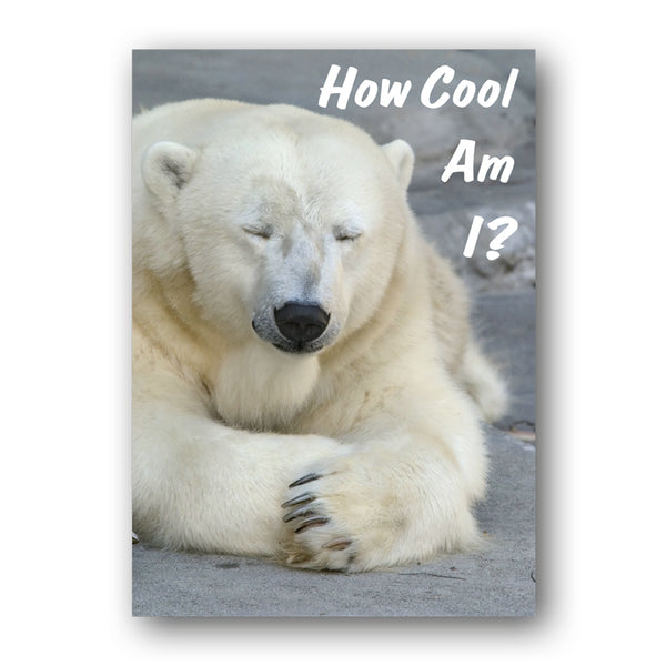 Funny Polar Bear A3 Laminated Poster from Dormouse Cards