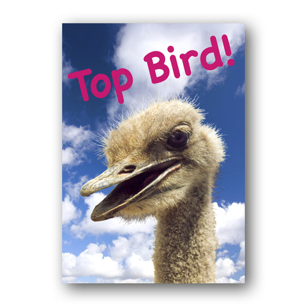 A3 Funny Emu Laminated Poster from Dormouse Cards