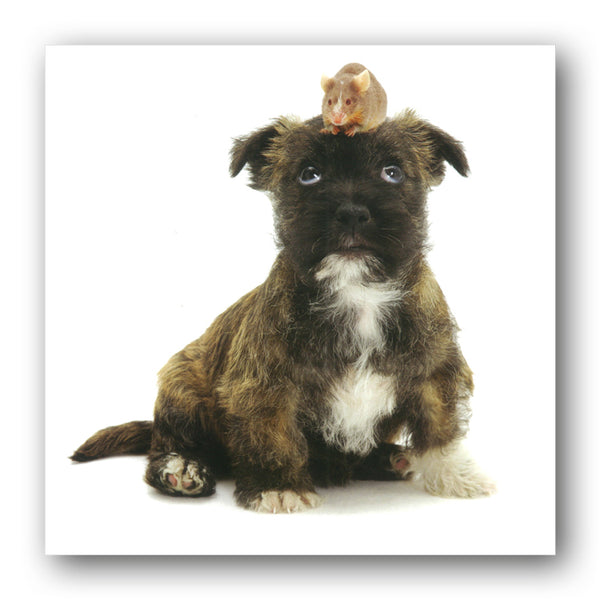 West Highland White and Jack Russell Terrier cross puppy and mouse Birthday Greetings Card from Dormouse Cards