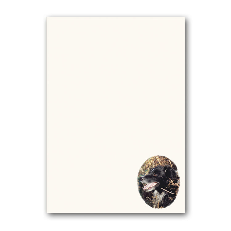 Border Collie Sheepdog A5 Notepaper from Dormouse Cards