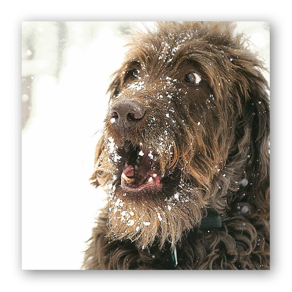 Funny Cool Dog Meets the Snow Christmas Card from Dormouse Cards