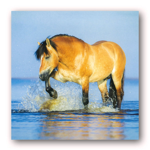 Horses Greetings / Birthday Card from Dormouse Cards