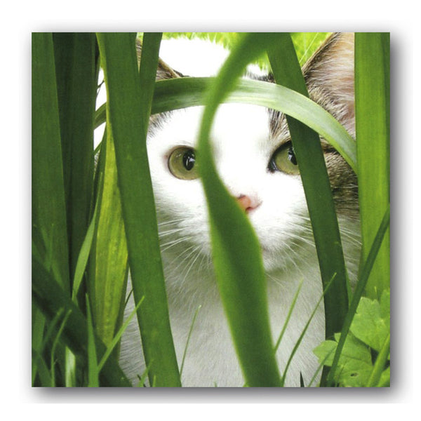 Cat in Long Grass Birthday Card from Dormouse Cards