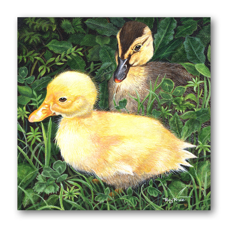 Ducks Notelets from Dormouse Cards