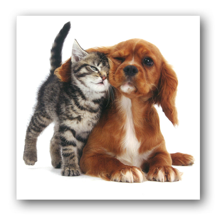 Tabby Kitten and Spaniel Puppy Birthday Greetings Card from Dormouse Cards