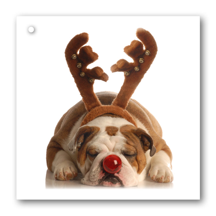 Lustre Gold Gift Wrap and Funny Christmas Bulldog with Antlers Gift Tags from Dormouse Cards