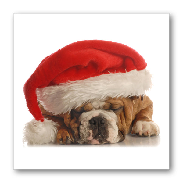 Funny Bulldog in Santa Hat Christmas Cards from Dormouse Cards
