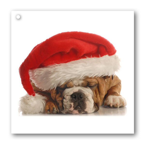 Pack of 10 Funny Bulldog in Santa Hat Gift Tags from Dormouse Cards