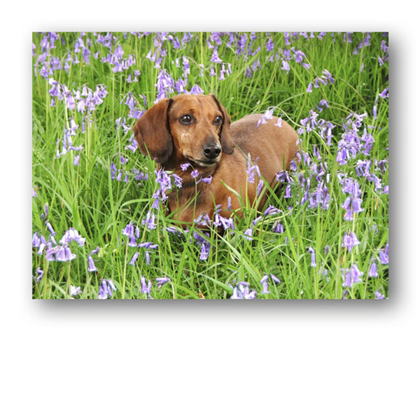 Speck the Dachshund in Bluebell Wood Mother's Day Card from Dormouse Cards