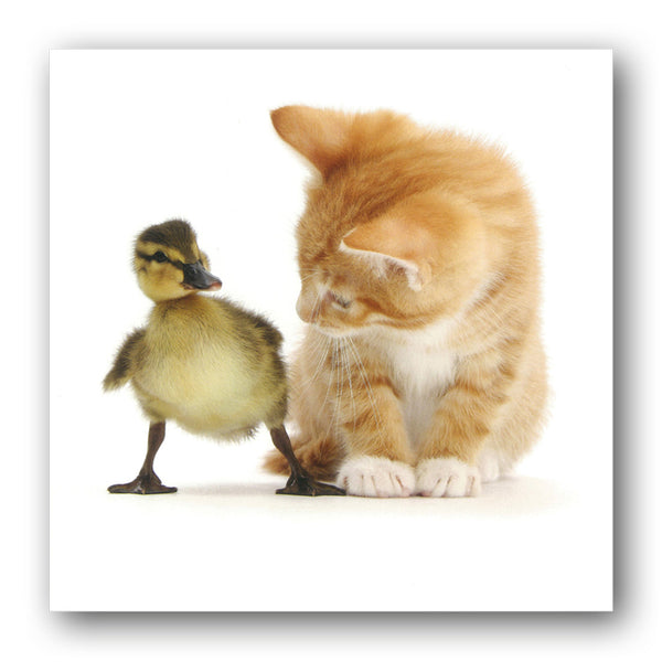Funny Ginger Kitten and Mallard Duckling Birthday Greetings Card to buy online at Dormouse Cards