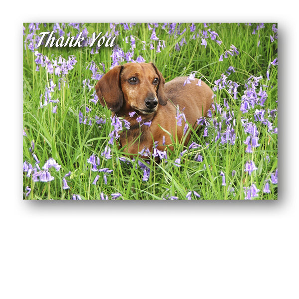 Speck the Dachshund in Bluebell Wood Thank You Card from Dormouse CardsThank You Card from Dormouse Cards
