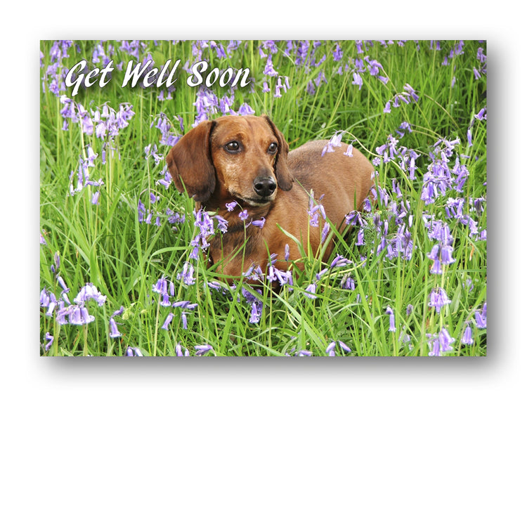 Speck the Dachshund in Bluebell Wood from Dormouse Cards