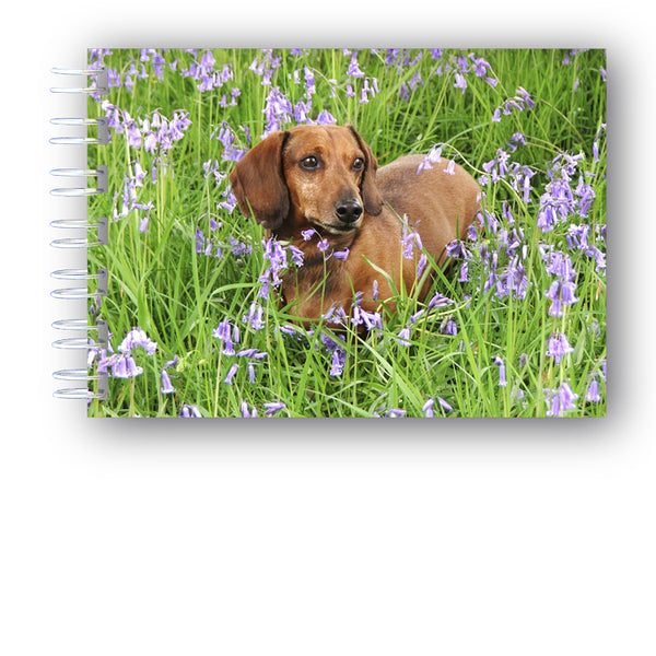 Speck the Dachshund in Bluebell Wood A6 Wire Bound Notebook from Dormouse Cards