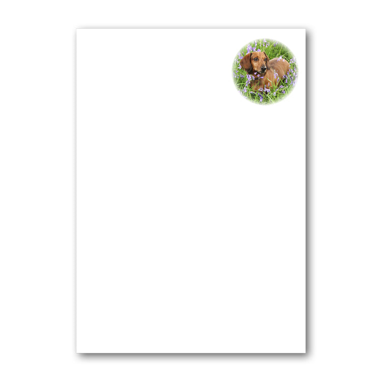 Speck the Dachshund in Bluebell Wood A5 Notepaper from Dormouse Cards