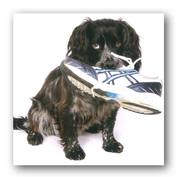 Funny Cocker Spaniel Greetings Birthday Card buy online at Dormouse Cards