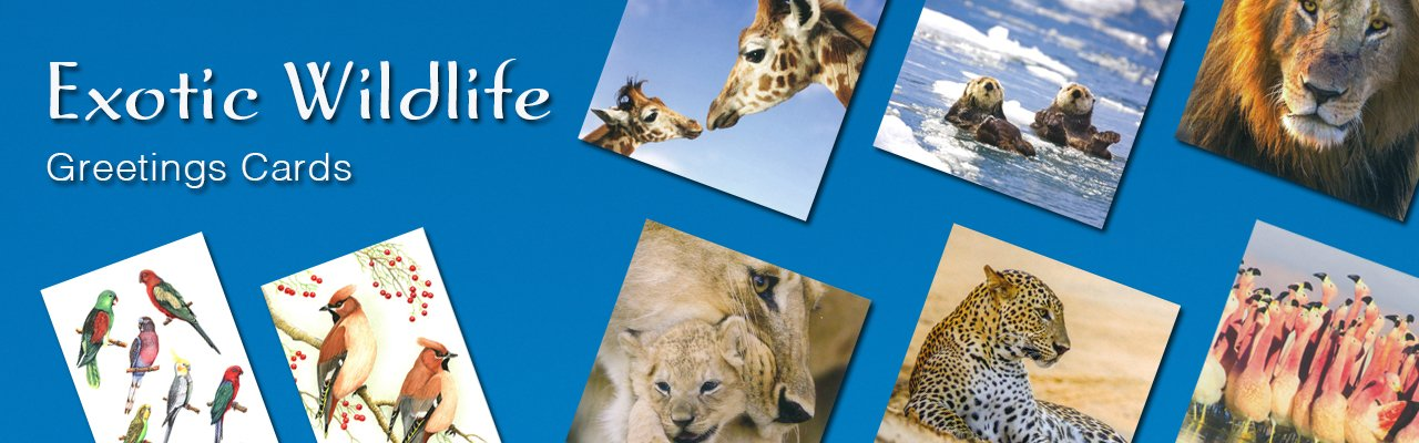 Buy High Quality Wildlife Christmas Cards from Dormouse Cards